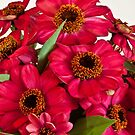 Hot Pink Zinnias  by Sandra Foster
