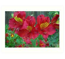 Lilies, I think - II Art Print