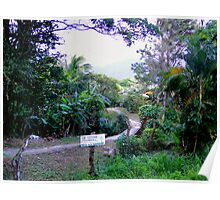 Lushness Of El Valle, Panama III Poster