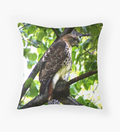 Red Tail Hawk 3 Throw Pillow