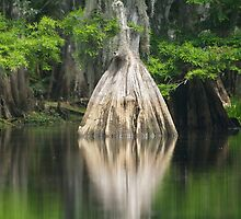 Cypress Reflection by Karen  Moore