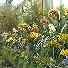 flowers, Auckland Winter Gardens by Camelot