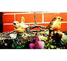 Little Bird, Little Bird.... Photographic Print