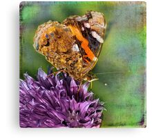 The Red Admiral. Canvas Print