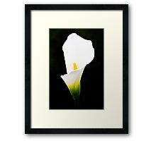 A Gift of Calla Lily Framed Print