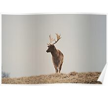 Alone and Free - Deer Photograph Poster