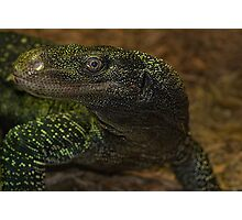 Monitor Lizard Grin Photographic Print