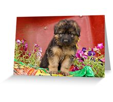Long Coated GSD Puppy Greeting Card