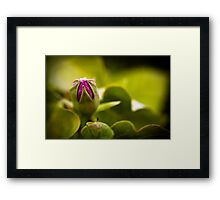 Flower Budding Framed Print