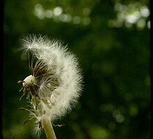 Puff by Michelle Anderson