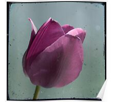 Single Tulip TTV Poster