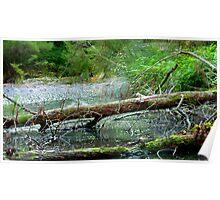 Creek scene Poster
