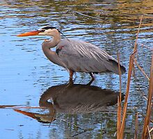 THE GREAT BLUE HERON  by Marie  Morrison