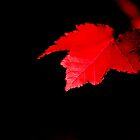 Red by Jenni Tanner