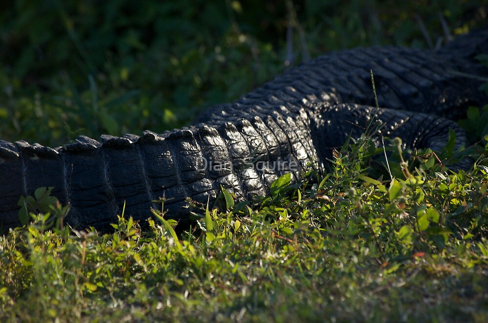 Gator Tail by Dian  Squire