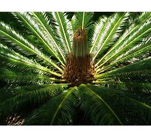 Tropical Plant Photographic Print