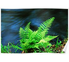 Fern by the Creek Poster