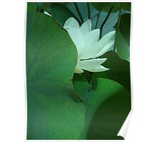 Bali Water Lily Poster