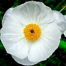 White Flower Weed by Sandra Moore
