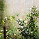 Morning Mist by Darlene Lankford Honeycutt