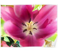 Inside my Flower Poster