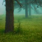 Spring Has Sprung Under a Blanket of Fog by sanderwood