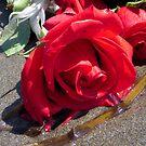 Ocean Roses by Tama Blough