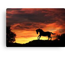 Silhouette Horse with Firey Sunset Canvas Print