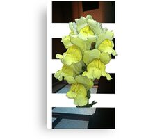 Yellow Blossum Canvas Print