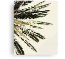 The Palms No. 2 Canvas Print