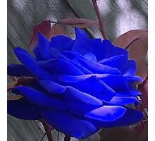 Rose in Blue Photographic Print