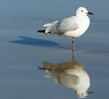 SEAGUL  by ANDREW CARMAN