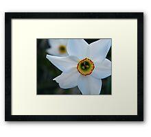 Floral ? Framed Print
