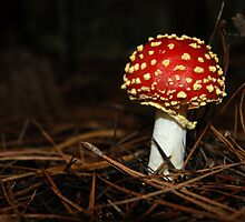 Wee little toadstool,*Amanita, fly agaric* by michellerena