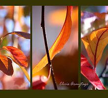 Colours of Autumn by Chris Armytage™
