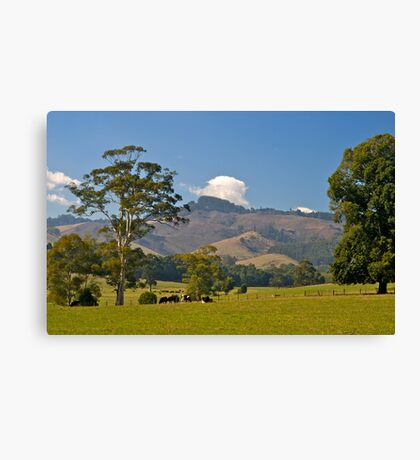 Victoria's best farmland, Mt Worth. Gippsland Canvas Print