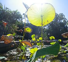 Lively lilly pads  by Aprel Dawes