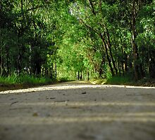 Country Road by AnnabelHC