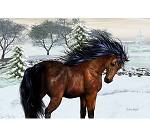 Winters Day .. a stallion in the snow Photographic Print