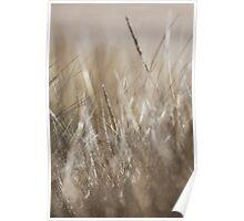 Long grasses in winter sun, shallow DOF Poster