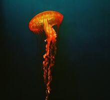 London Jelly Fish by DDabug