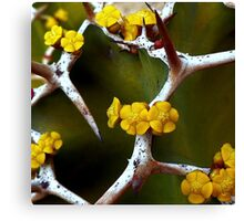 Hope Between the Thorns Canvas Print