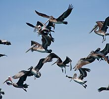 What Flight Pattern?  There They Are! by phil decocco
