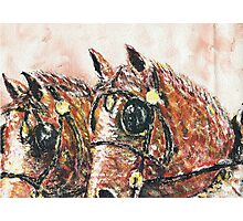 Shire Horses Photographic Print