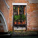 Near the Bridge by Jacinthe Brault