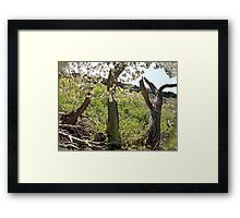 Apple Blossums in the Canyon Framed Print