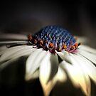Lighted Daisy by Darlene Lankford Honeycutt