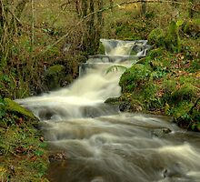 The Beck at High Dam by Jamie  Green