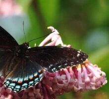 Red Spotted Purple Sticker