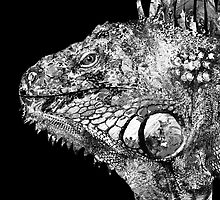 Black And White Iguana Art - One Cool Dude 2 - Sharon Cummings by Sharon Cummings